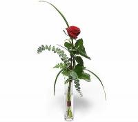Соло Состав: роза- 1 шт. Минимальный заказ- 5 букетов.