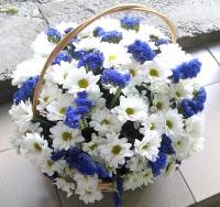 Лето Состав корзины: Хризантема- 10 веток статица синяя- 5 веток корзинка средняя