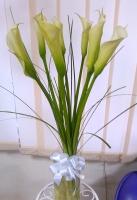 Букет 9 белых калл Состав букета: калла белая украинская- 9 шт декоративная зелень Оформление: лента флористическая, бант Размер: 60- 70 см