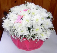 Золушка Состав корзины: хризантема- 5 шт, гипсофила, бабочка, корзина. Размер: 30х 30 см.