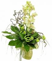 Красота природы Состав: орхидея белая - 1 ветка, декоративная зелень, флористический декор, бамбук- 3 шт, аспидистра.