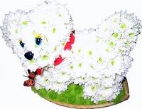 Белый песик