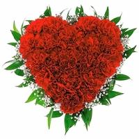 Сердце из гвоздики Состав: гвоздика- 19 шт, гипсофила, зелень, оазис. Размер: диаметр 30 см.