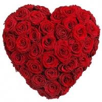 Сердце для тебя Состав: роза красная- 101 шт, форма-оазис. Размер: 55 х 55 см.