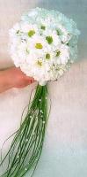 Букет невесты № 195 Состав букета: ромашковая хризантема- 15 шт, зелень, партбукетник. Бутоньерка для жениха в подарок!