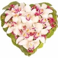 Сердце из орхидей Состав: орхидеи Цимбидиум- 1 ветка, цветы Ваксфлауэр- 5 веток, зелень, сердце-оазис. Размер: 35 х 35 см.