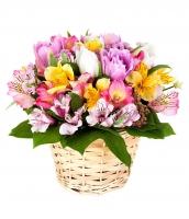 Весеннее солнце Состав корзины: тюльпан- 7 шт, альстромерия- 9 ветки, зелень, корзина.