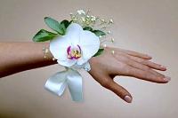 Орхидея белая Состав: орхидея фаленопсис, гипсофила, зелень.