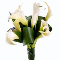 Белые каллы Состав букета: калла белая- 9 шт, зелень. Оформление: лента флористическая. Размер: длина 55- 60 см.