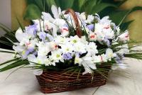 Чудеса флористики