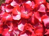 Красные лепестки роз Состав: лепестки красные- 1000 шт