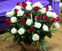 Корзина шикарных роз
