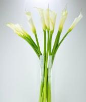 Белоснежка Состав букета: калла- 11 шт. Необычайной красоты цветок каллы является символом успеха, чистоты, счастья и добра. Цветовую гамму и состав букета можно изменить по Вашему усмотрению.