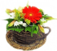 Цветы в чашке Состав: гербера- 1 шт, альстромерия- 2 шт, хризантема- 1 шт, солидаго- 5 шт, зелень, чашка. Очаровательная композиция из цветов в плетенной чашке станет украшением на Вашем столе.