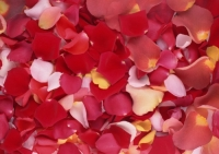 Разноцветные лепестки роз Состав: 1000шт. ( приблизительно 5 л ведро) Дополнительно Вы можете приобрести корзинку. Цена корзины- 100 грн.