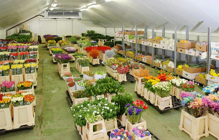 Цветы и принципы нашей работы